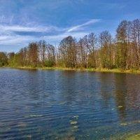 на озере :: Владимир