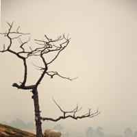 Вышли двое из тумана ... :: Татьяна Алферова