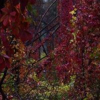 Осень у моего порога. Autumn is at my doorstep. :: Юрий Воронов
