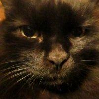Страшнее кошки зверя нет! :: Андрей К