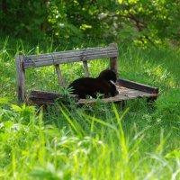 Старый кот, старая скамья... :: Юрий Куликов
