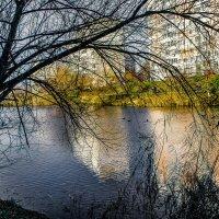 Городской пруд :: Владимир Кроливец