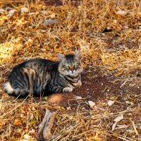 Осенний котик :: Александр Деревяшкин