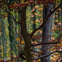 Танцующее дерево :: Nikolai Martens