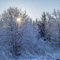 Морозное снежное утро :: Алексей Сметкин