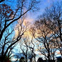 Вечернее небо ноября  сквозь ажур деревьев... :: Лидия Бараблина
