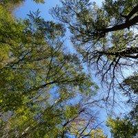 Конференция деревьев :: Heinz Thorns