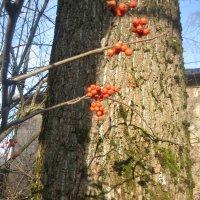 Дерево :: Maikl Smit