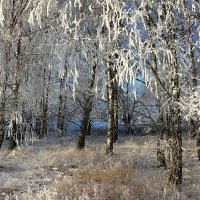 Начало зимы... :: Alex ARt