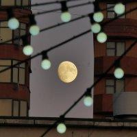 Луна и птицы.. :: Alexey YakovLev