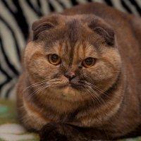 Ищу  достойного кота для совместного досуга. :: Александр