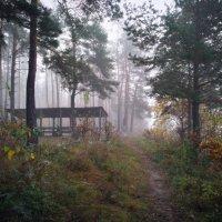 осенний лес в тумане :: Алексей Клименко