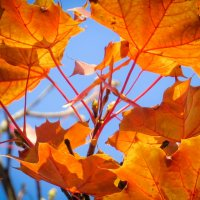 Осень... Почки? :: SVetlana Veter