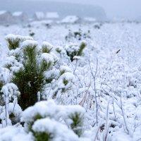 первый снег2 :: Елена