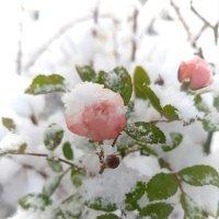Первый снег :: Светлана Дунаева
