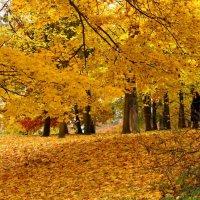 Золотая осень :: Сергей Карачин