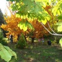 Осень в парке :: марина ковшова
