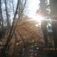 Осень :: Maikl Smit