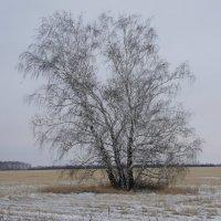 Одинокие в поле. :: сергей