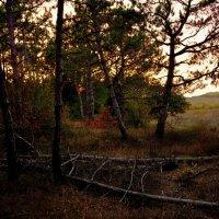 Закат в лесу. :: Любовь
