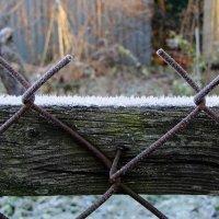 Морозное утро :: Маргарита
