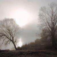 Под холодною властью тумана. :: Инна Щелокова