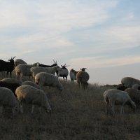 Сельский вечер 3 :: Natali