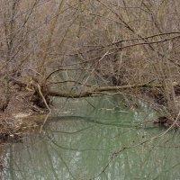 Речушка,текущая среди деревьев :: Лира Цафф