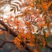 Осенний дождь :: anton nenakhov