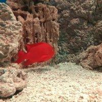 Рыбки из Москвариума :: Елена