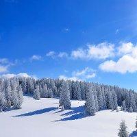 Мороз и солнце :: Alex ARt