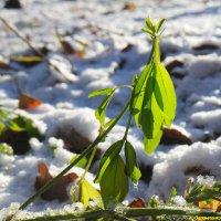 Упрямая зелень ноября.. :: Андрей Заломленков