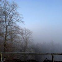 Туман и мороз :: Heinz Thorns