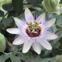 тропический цветок :: Yulia Sherstyuk