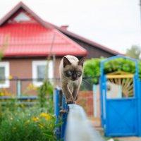 Кошка, которая гуляет сама по себе :: Marik ...