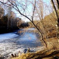 А у нас уже лед на озере :: Raduzka (Надежда Веркина)