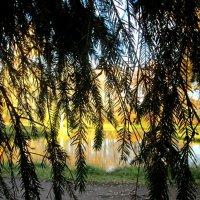 Сквозь занавес виднелась осень :: Самохвалова Зинаида