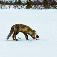 Ловись рыбка большая и маленькая. :: Анатолий Бахтин