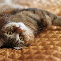 Фотомодель отдыхает... :: Ирина