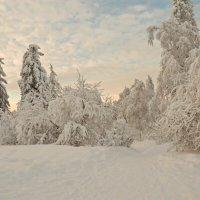 У зимы немного красок, но рисует она великолепно! :: Galina