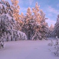 Здравствуй, зимушка-зима...! :: Татьяна .