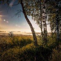 Утро в поле :: Александр