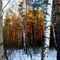 золотой лес :: Владимир