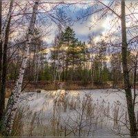 Первое утро зимы 3 :: Андрей Дворников