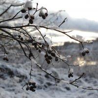 Первый снег :: Kventin Natabos