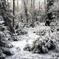 Этюд с первым снегом :: Kventin Natabos