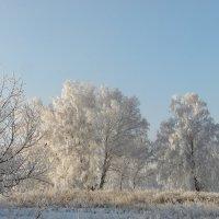 Озорная,кружевная,белоснежная зима. :: nadyasilyuk Вознюк