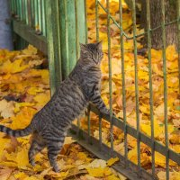 Дворовый кот :: Анна Углова (Рыбакова)