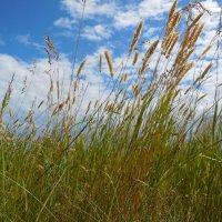 Травы, травы :: Надежда