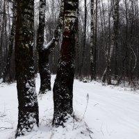 Дождались снега. :: веселов михаил